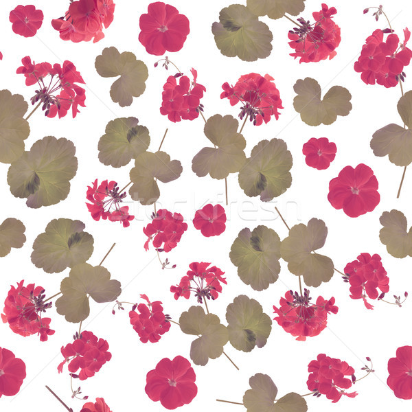 seamless   pattern of geranium flowers Stock photo © saddako2
