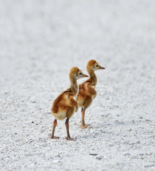 állvány kettő kicsi tavasz út Stock fotó © saddako2