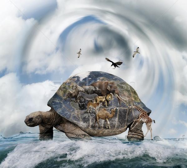 World Turtle Concept Stock photo © saddako2