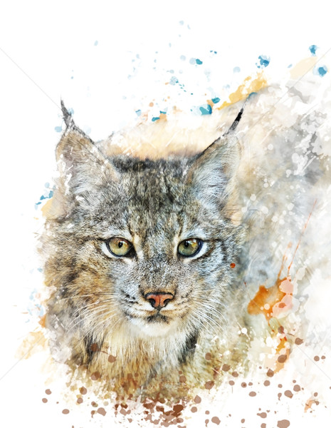 Stock photo: Watercolor Image Of Lynx