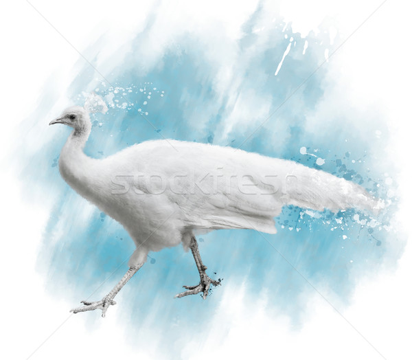 Couleur pour aquarelle image blanche paon numérique peinture Photo stock © saddako2