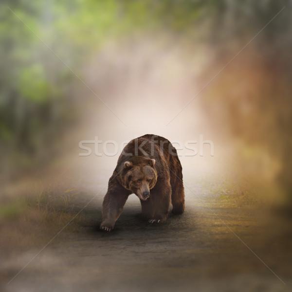 Lopen hout pad bos bruin Stockfoto © saddako2