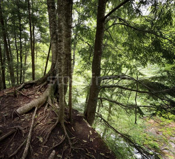 Trees On A Cliff Stock photo © saddako2