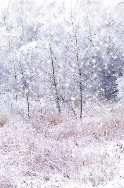 Invierno árboles nieve paisaje blanco rama Foto stock © saddako2