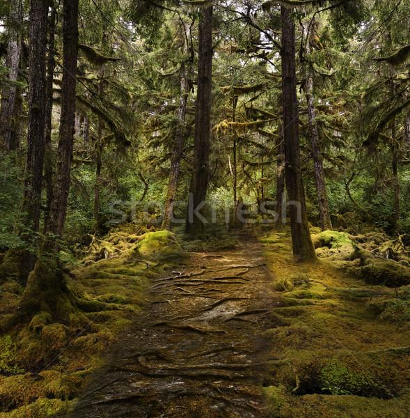Kleurrijk regenwoud mooie bos natuur parcours Stockfoto © saddako2