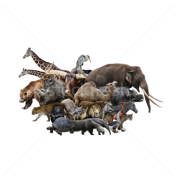 Animals Concept Stock photo © saddako2