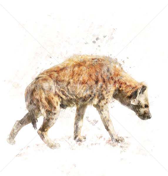 Stock photo: Watercolor Image Of Spotted Hyena