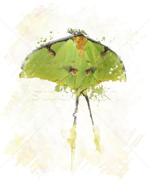 Luna Moth Watercolor Stock photo © saddako2