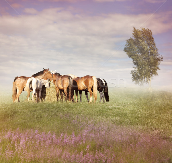 Horses Eating Hay Stock photo © saddako2