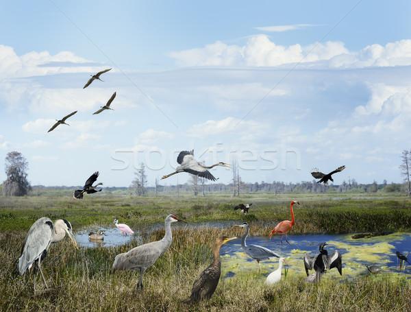 Florida Wetlands Collage Stock photo © saddako2