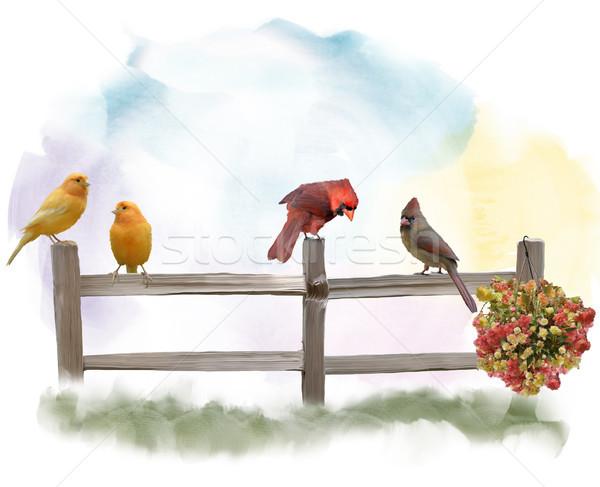 Birds on a Fence watercolor Stock photo © saddako2