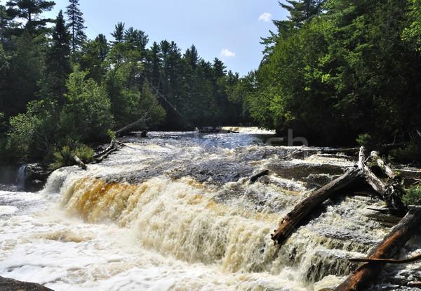 Alsó Michigan erdő fák nyár park Stock fotó © saddako2
