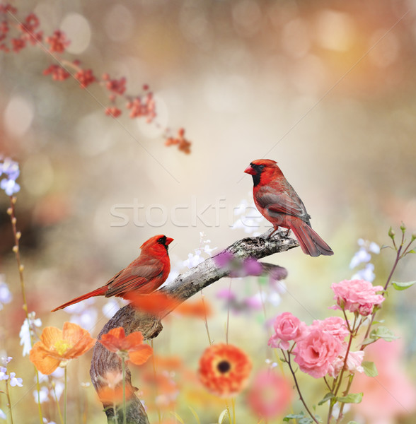 Settentrionale fiore uccello wallpaper impianto ramo Foto d'archivio © saddako2