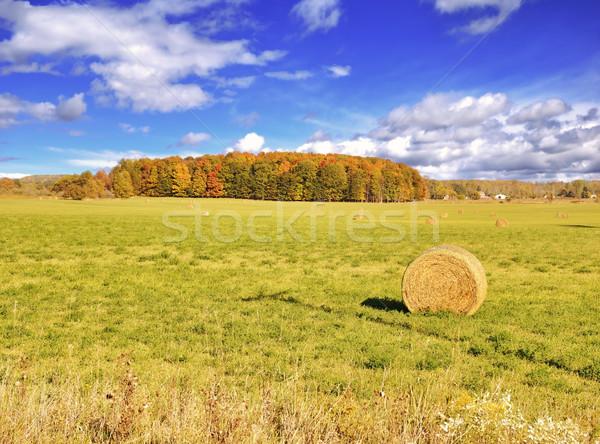 Sonbahar alan renkli orman mavi gökyüzü gökyüzü Stok fotoğraf © saddako2