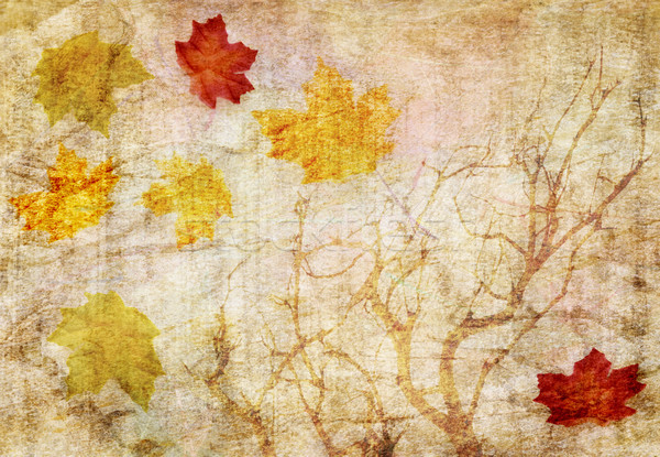 grunge abstract fall  background  Stock photo © saddako2