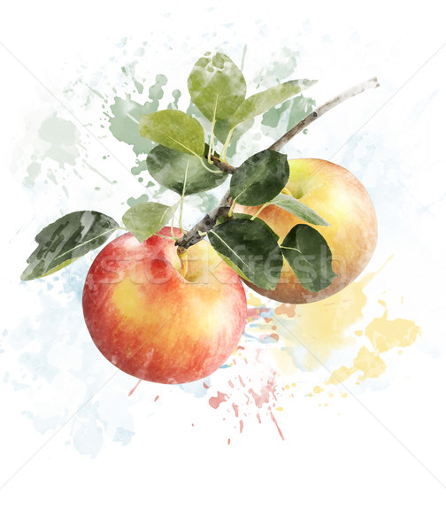Stock photo: Watercolor Image Of Apples