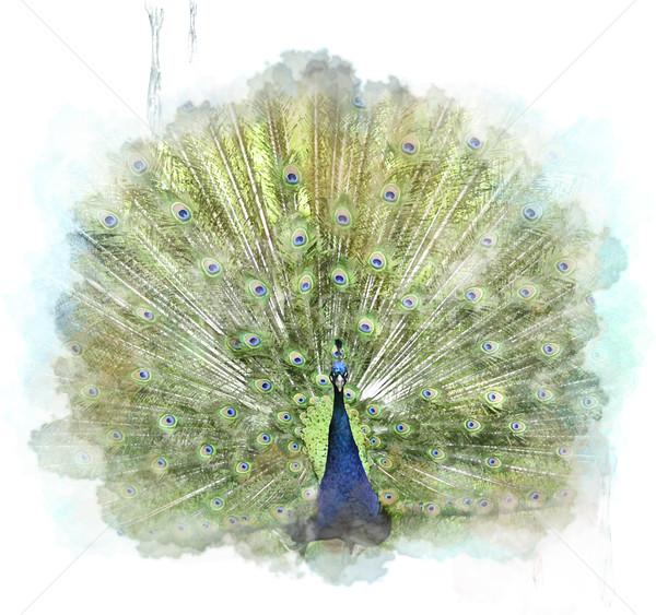 Tavuskuşu suluboya dijital boyama doğa boya Stok fotoğraf © saddako2