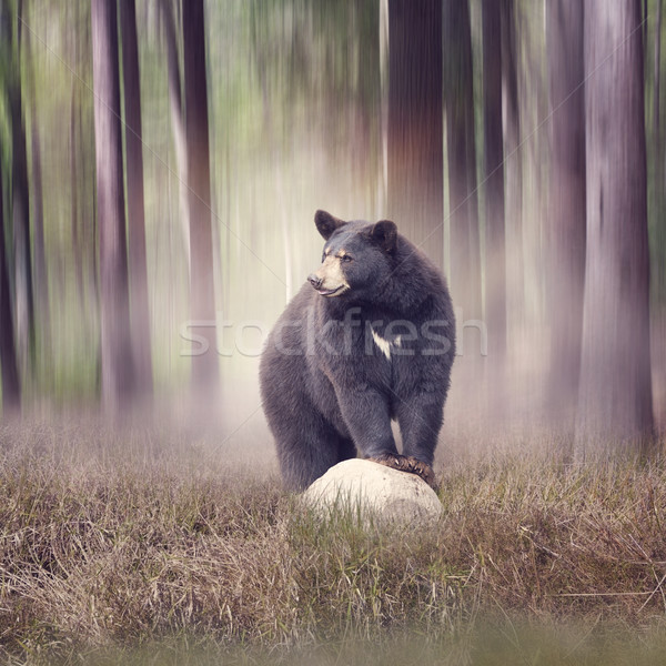 черный несут лесу рок дерево природы Сток-фото © saddako2