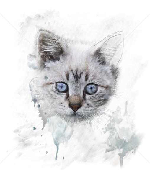 Acquerello ritratto giovani cat digitale pittura Foto d'archivio © saddako2