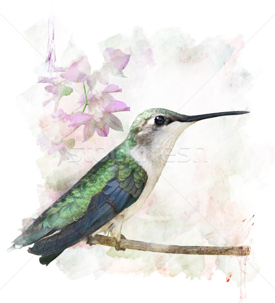 Hummingbird Perching Stock photo © saddako2