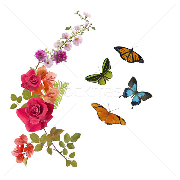 Butterflies and flowers arrangement Stock photo © saddako2