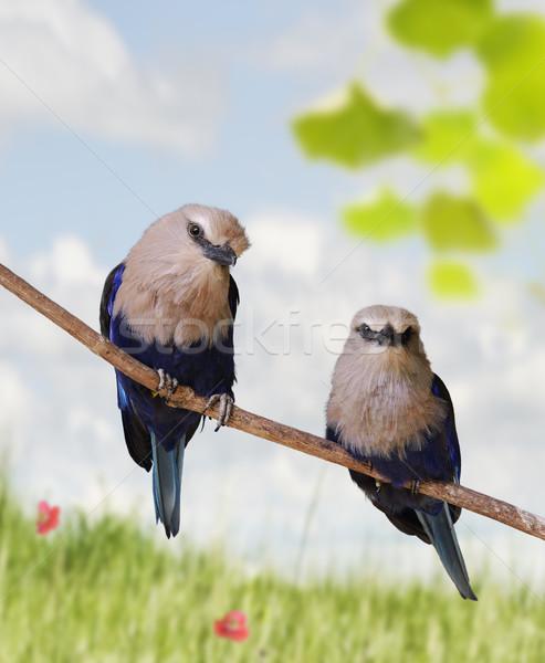 Tropical Birds Stock photo © saddako2
