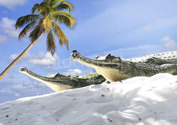Indian Krokodile Sand Himmel Natur Tiere Stock foto © saddako2