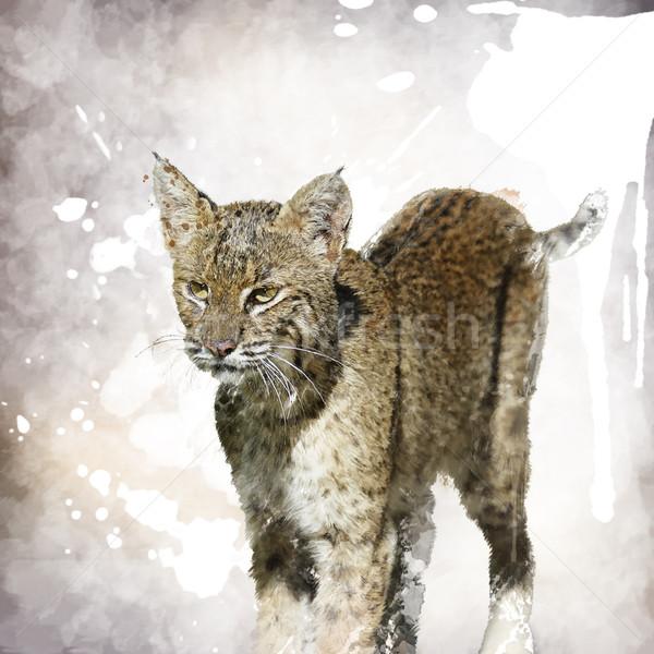 Bobcat Watercolor Stock photo © saddako2