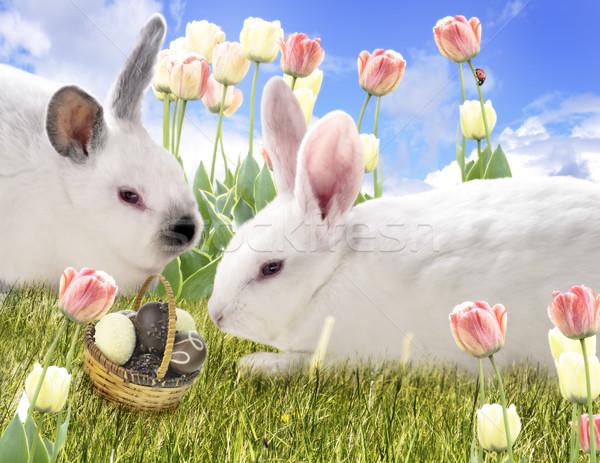 Rabbits And Chocolate Eggs Stock photo © saddako2