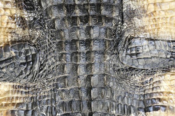 аллигатор кожи текстуры природы шаблон животного Сток-фото © saddako2