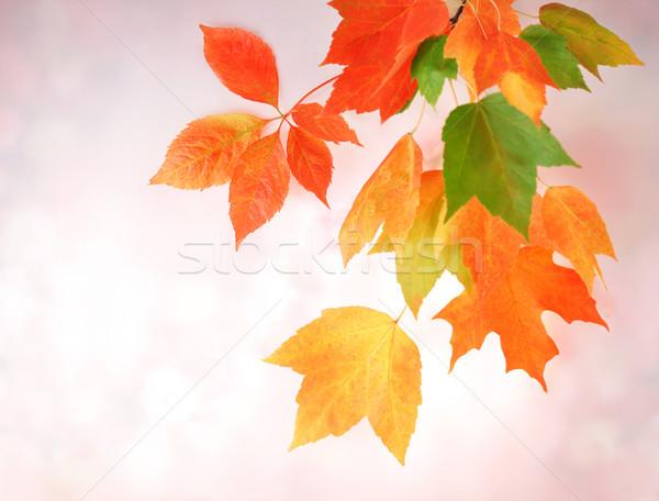 Kleurrijk Rood najaar kleur behang Stockfoto © saddako2