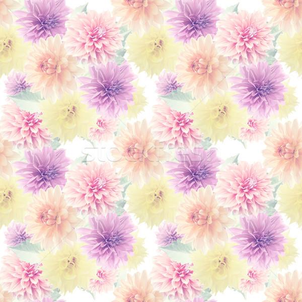 Model dalya çiçekler sonsuz Stok fotoğraf © saddako2
