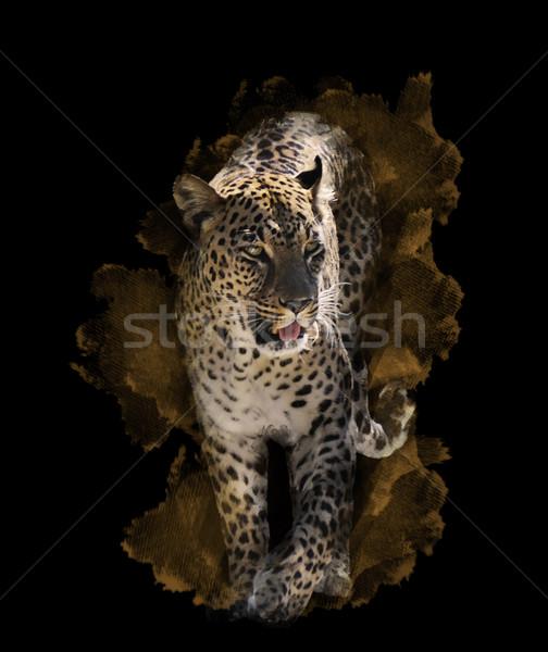 акварель изображение Leopard цифровой Живопись черный Сток-фото © saddako2