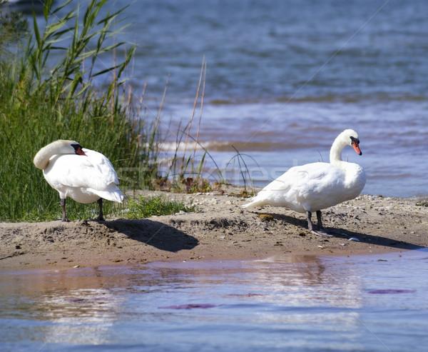 два белый воды закат птица синий Сток-фото © saddako2