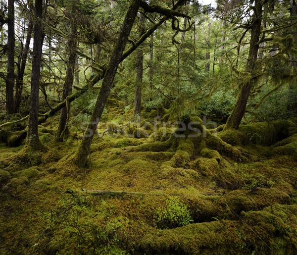 Rainforest güzel renkli doğa yaz yeşil Stok fotoğraf © saddako2