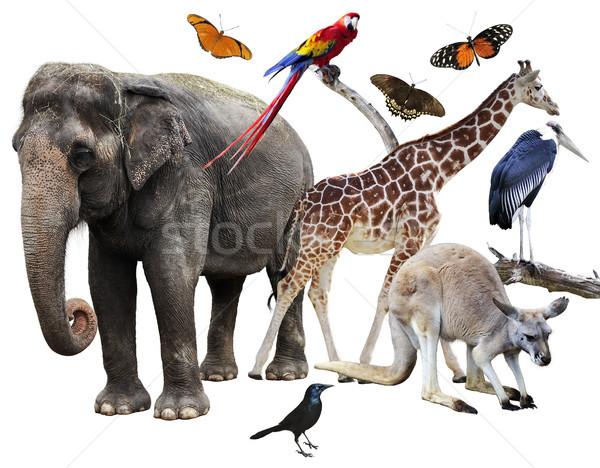 Hayvanlar kolaj beyaz kelebek fil Stok fotoğraf © saddako2
