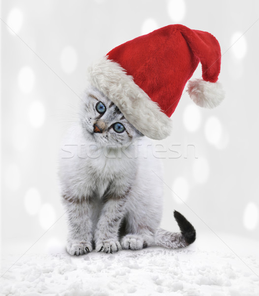 Stock photo: Young Cat In A Christmas Hat