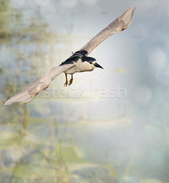 Nacht reiger vlucht vogel meer dier Stockfoto © saddako2