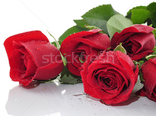 Rosas vermelhas gotas de água rosa beleza verde Foto stock © saddako2