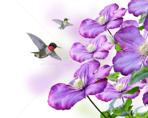 цветы природы птица животного мужчины крыло Сток-фото © saddako2