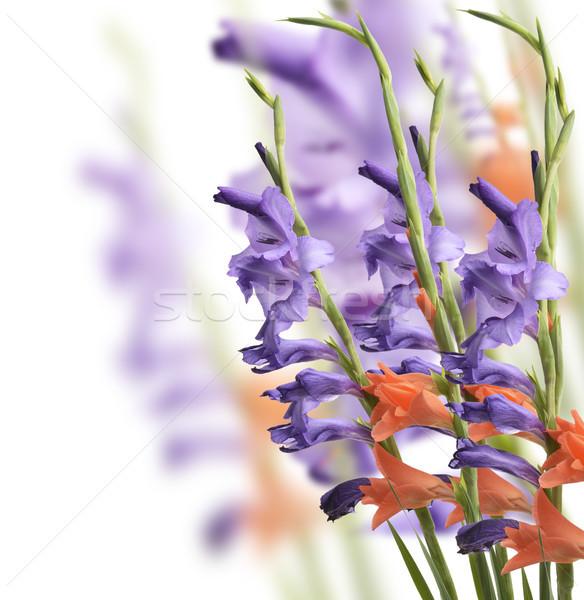 Virágok színes fehér természet növény rózsaszín Stock fotó © saddako2