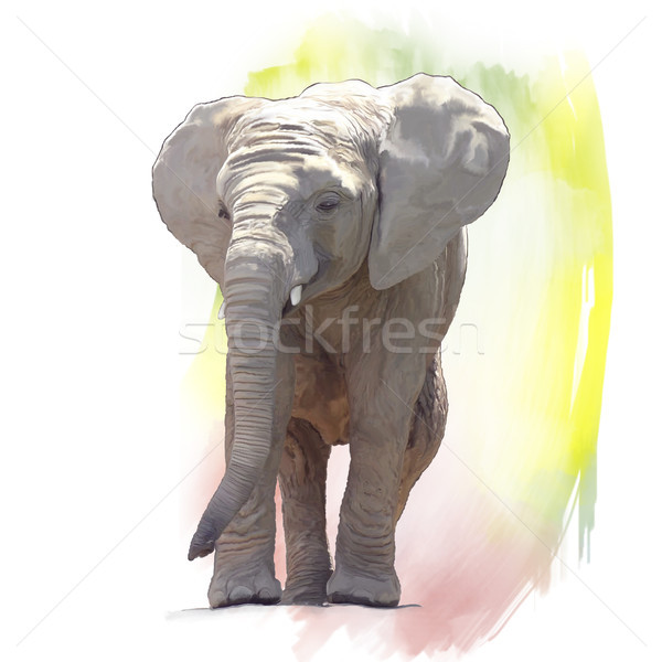 Baby Elephant Watercolor Stock photo © saddako2