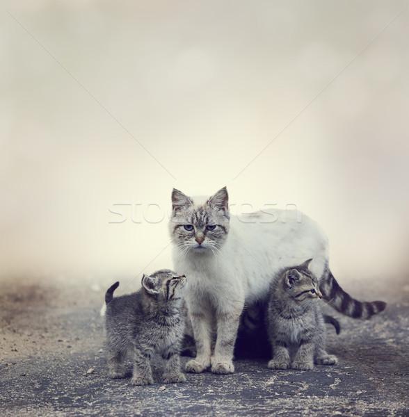 Hajléktalan kiscicák anya vmi mellett macska állat Stock fotó © saddako2