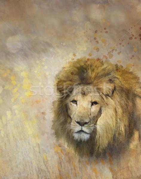 Stock photo: African Lion Portrait