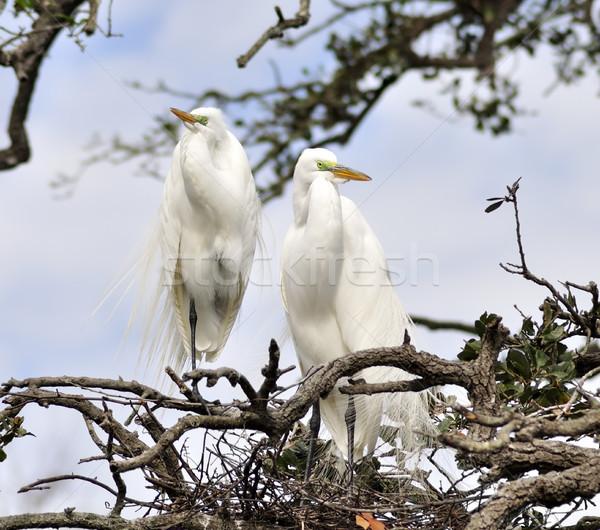 Albero natura verde animale nido Foto d'archivio © saddako2