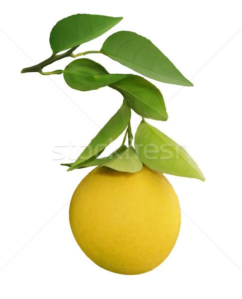 Narancsfa ág digitális festmény étel gyümölcs Stock fotó © saddako2