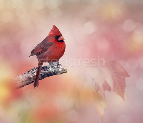 Mannelijke noordelijk blad vogel kaart tak Stockfoto © saddako2