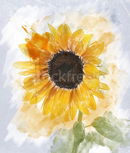 水彩画 画像 ヒマワリ デジタル 絵画 葉 ストックフォト © saddako2