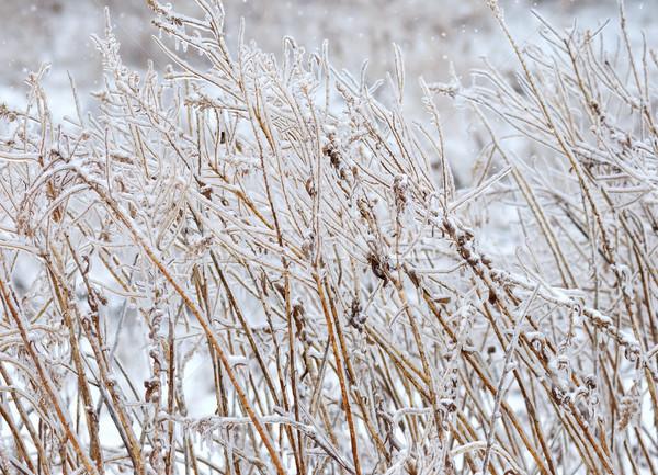 Winter bush ijs storm landschap Stockfoto © saddako2