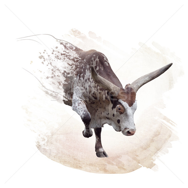 Stock photo: brown and white longhorn steer watercolor